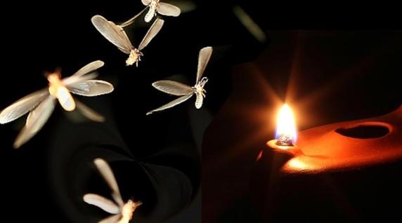 laron_lampu_api